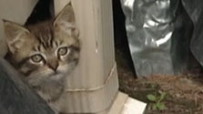 CityStream SplashBack: Feral Cats