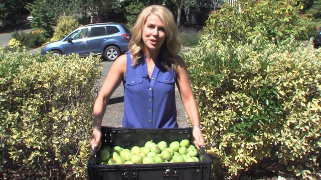 CityStream: City Fruit 7/30/15