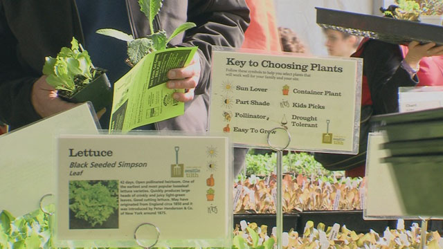 CityStream: Edible Plants