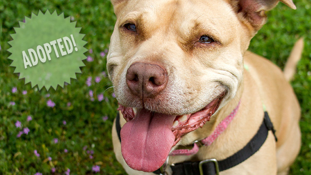 CityStream Pet of the Week: Daisy 4/28/16