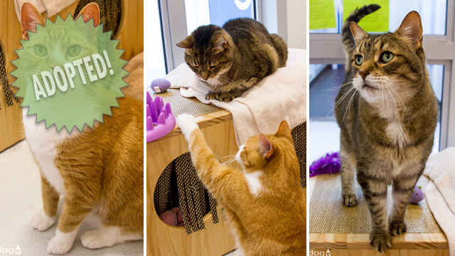 CityStream Pet of the Week: Simba & Leo