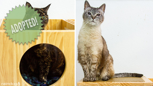 CityStream Pet of the Week: Lily & Dinah