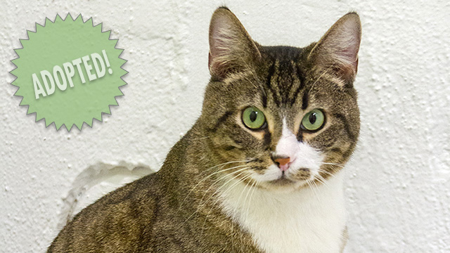 CityStream Pet of the Week: Q-Bert