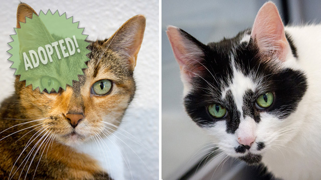 CityStream Pet of the Week: Athena & Artemis