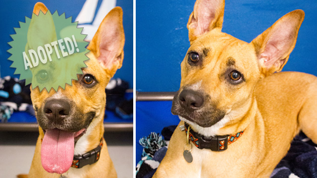 CityStream Pet of the Week: Shabazz