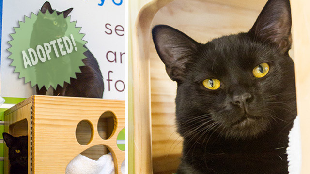 CityStream Pet of the Week: Boy Wonder & Boy Tudor