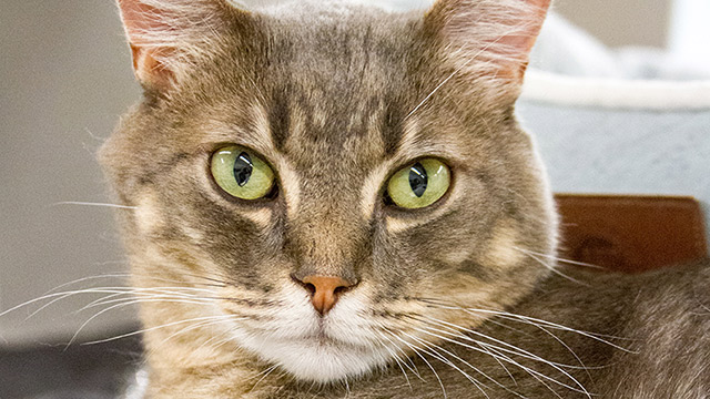 CityStream Pet of the Week: Wednesday
