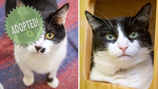 CityStream Pet of the Week: Charlie & Jack
