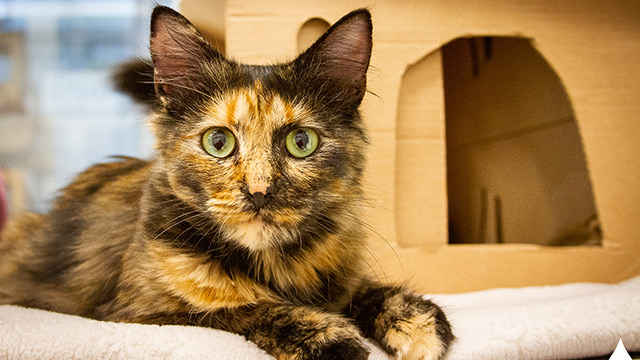 CityStream Pet of the Week: Autumn