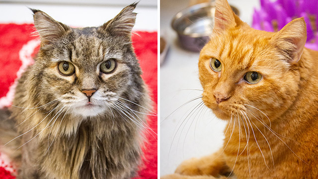 CityStream Pet of the Week: Sasha & Sammy
